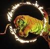 Цирки в Павловке