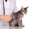 Ветеринарные клиники в Павловке